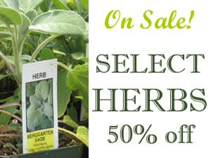 Select herbs now 50% off at Milmont Garden Center
