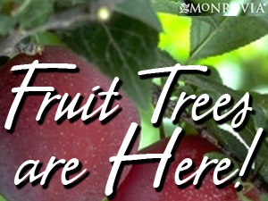 We sell Monrovia tress and shrubs. Fruit trees are here now!