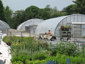 Once the plants are ready, they are transported to the retail area for our customers to purchase.