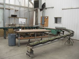 This conveyor system helps us plant and process seedlings and young plants faster.