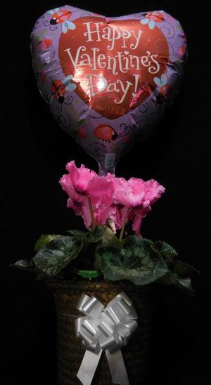 Combo #1 - Cyclamen Basket, Balloon, Bow and Gift Card