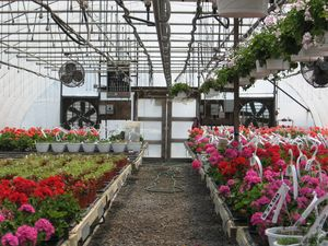 Our greenhouses are kept at just the perfect temperature and humidity with fans and watering systems.