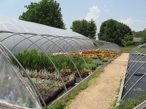 When it's time to let the plants get sun and fresh air, we can roll away the plastic tops of the greenhouses.