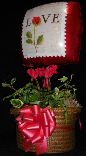 Combo #2 - Cyclamen Basket, Asst Plants, Balloon, Bow and Gift Card