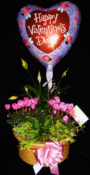 Combo #3 - Cyclamen Basket, Asst Plants, Peace Lily, Balloon, Bow and Gift Card
